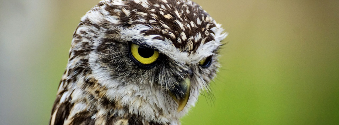 Best places to see burrowing owls, WildSide, World Wild Web