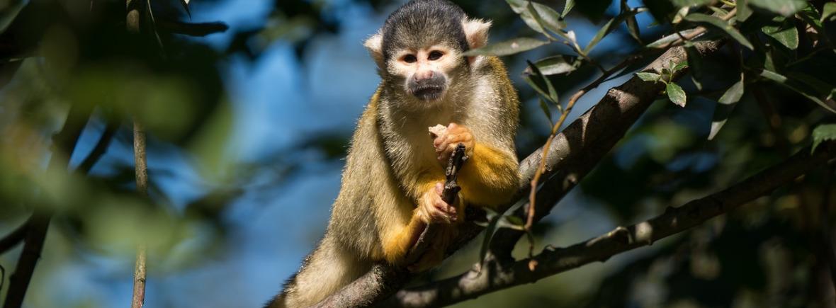 where to see squirrel monkeys, WildSide, World Wild Web