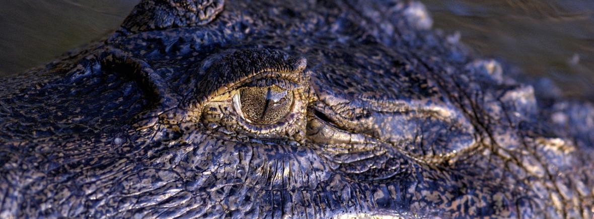 Best places to see Orinoco crocodiles, WildSide, World Wild Web