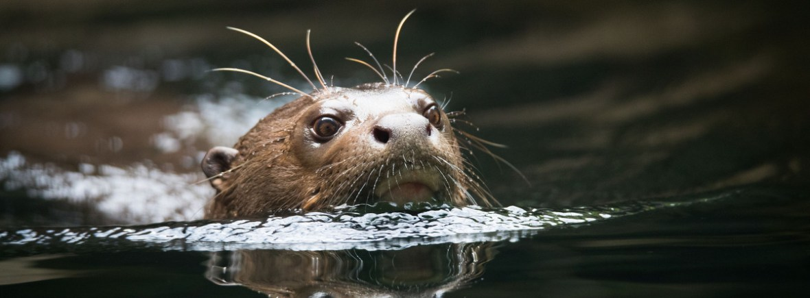 Best places to see giant otters, WildSide, World Wild Web