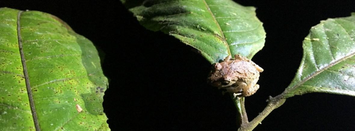 Wildlife in Mindo, WildSide, World Wild Web