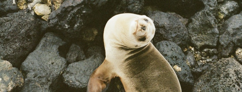 Sustainable travel in Galapagos, WIldSide, World Wild Web