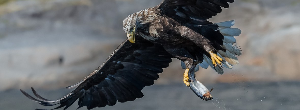 Where to see white-tailed eagles, WildSide, World Wild Web