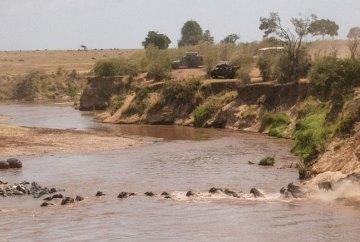 wildlife in maasai mara, wildside, world wild web