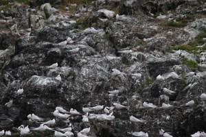 looking for penguins in tierra del fuego wildside world wild web