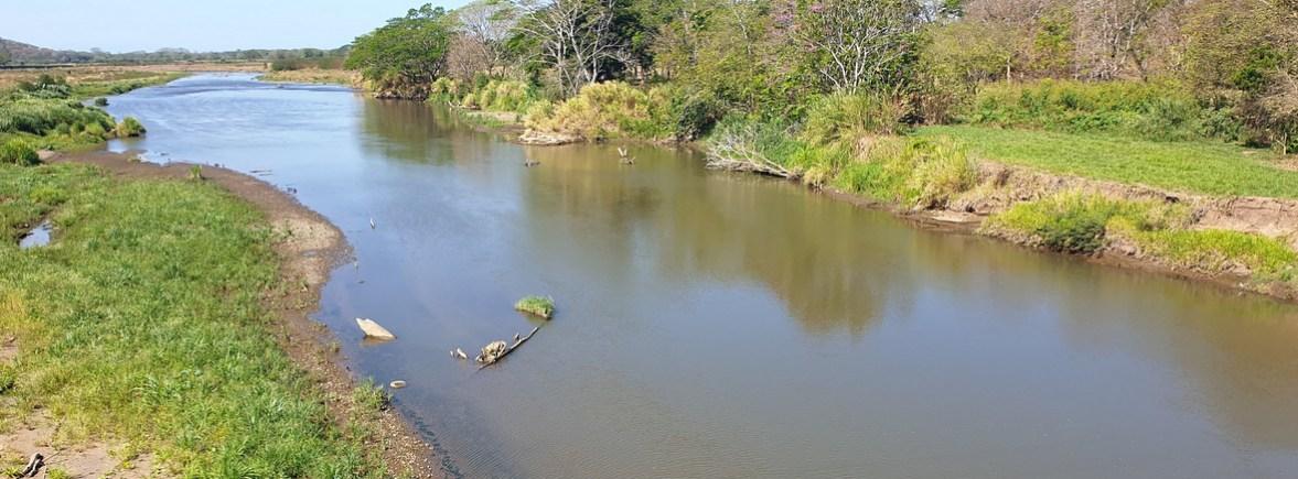 wildlife in crocodile bridge, wildside, world wild web