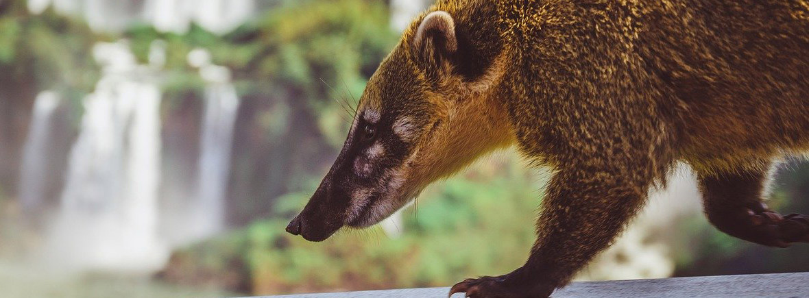 where to see coatis, wildside, world wild web