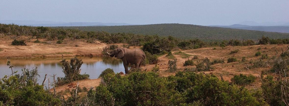 wildlife in addo, wildside, world wild web