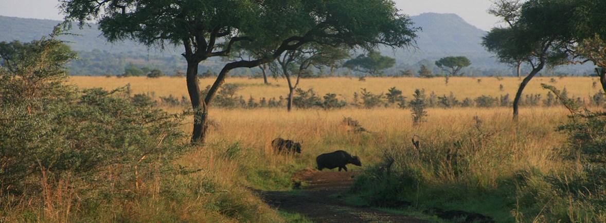 wildlife in ruma, wildside, world wild web