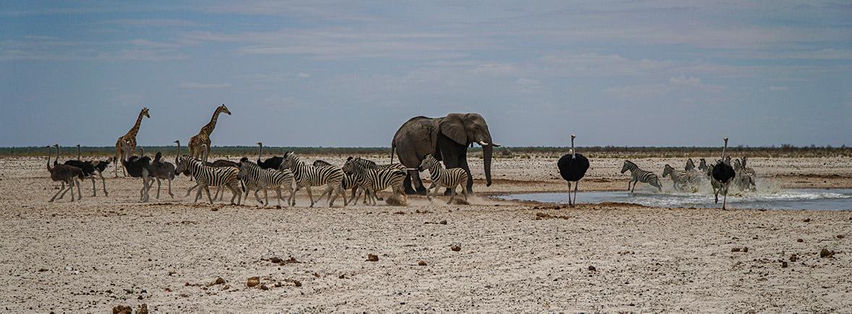 wildlife in etosha, wildside, world wild web