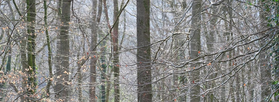 wildlife in forest of dean, wildside, world wild web