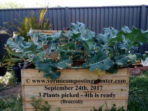 4 - Vermicomposting Planter Worm Farm - 240917