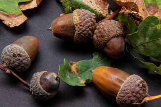 Negative thoughts are like acorns.....