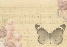 butterfly-957451_640