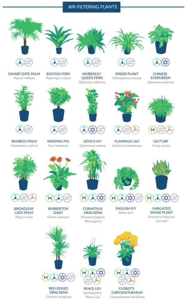 Why indoor plants are important for indoor air quality ...