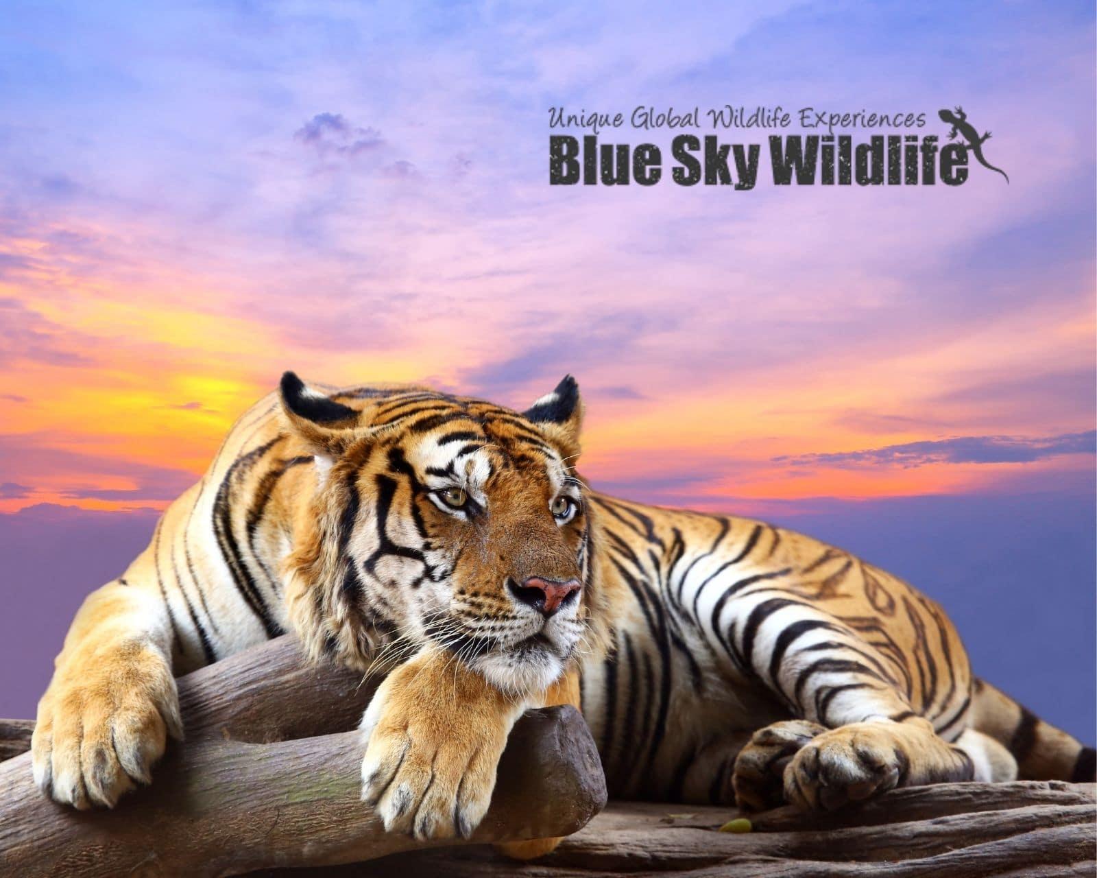 Freelance Copywriter For Wildlife Blog Travel Tours (2)