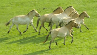 Minnesota Zoo Funding Proposal Video wild horses