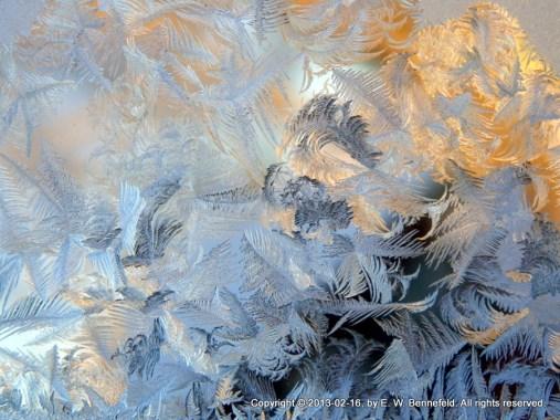 frost photo by Elizabeth (Lizl) Bennefeld