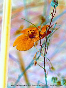 wild flax flower in my garden (colours altered), orange flower and greenish-blue stem,