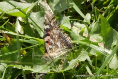 Noontime Butterfly