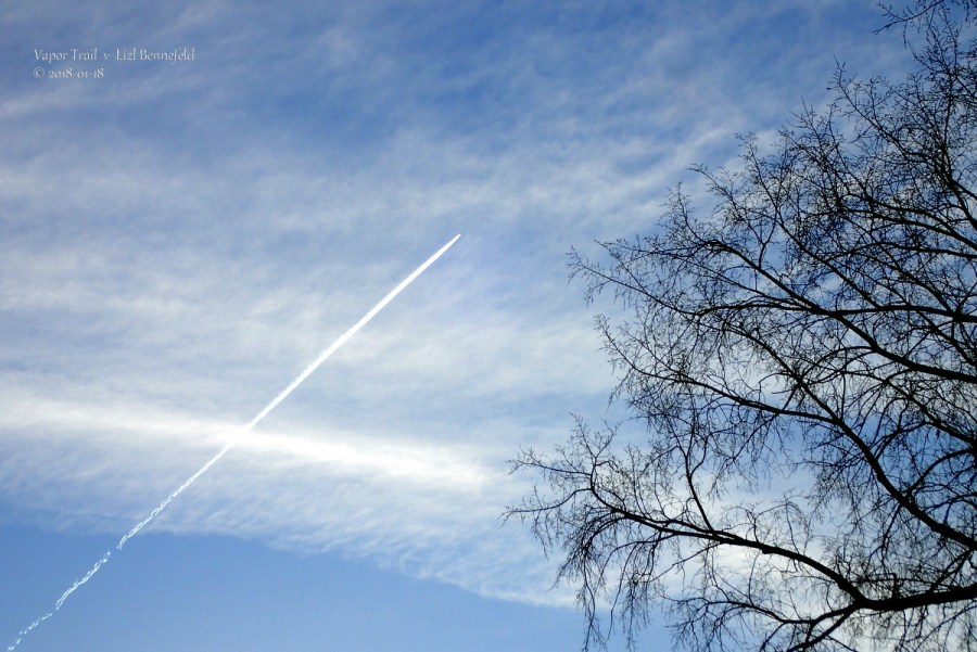 jet plane vapor trail across the eastern sky at morning, tree branches in the foreground