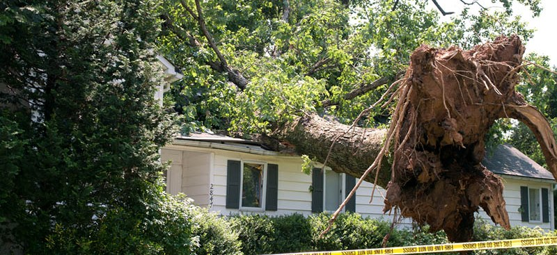Bin Damaged Trees Quickly With Professional Residential Tree Removal In Los Feliz