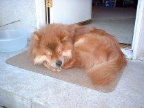 Our front door mat was often in the shape of sleeping Quantum.