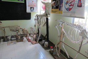 The veterinarian lab at the UAC-Carmen Pampa
