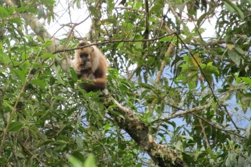 Wild monkey spotting!