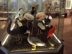 Meteora Natural History Museum