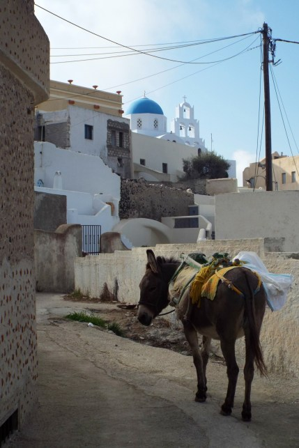 Donkey on Santorini