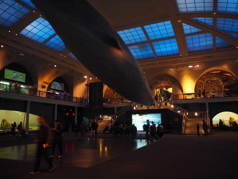 Museum of Natural History NY