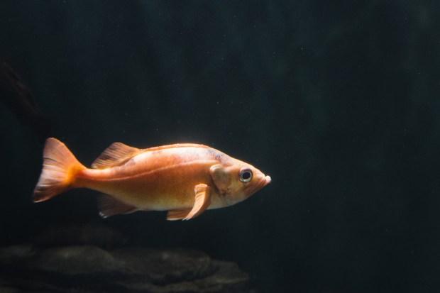 Baby Beluga - 15