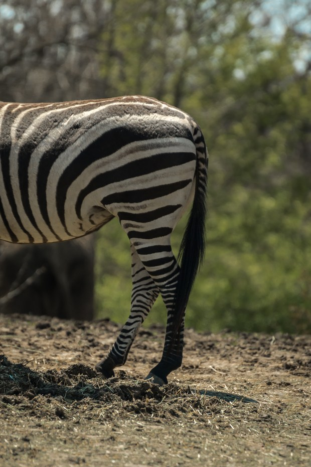 Pittsburgh Zoo Walkthrough - 12
