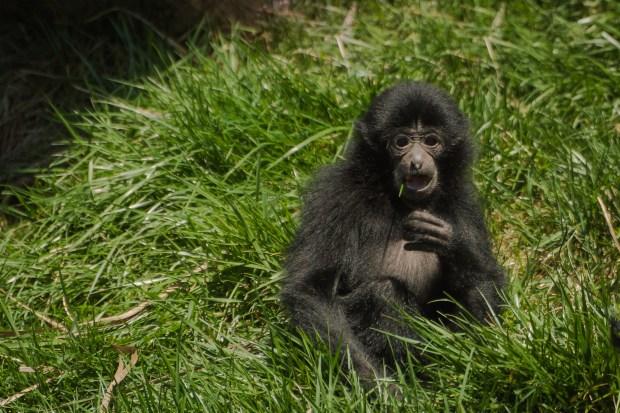 Pittsburgh Zoo Walkthrough - 16