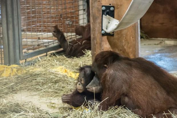 National Zoo w Steve -41