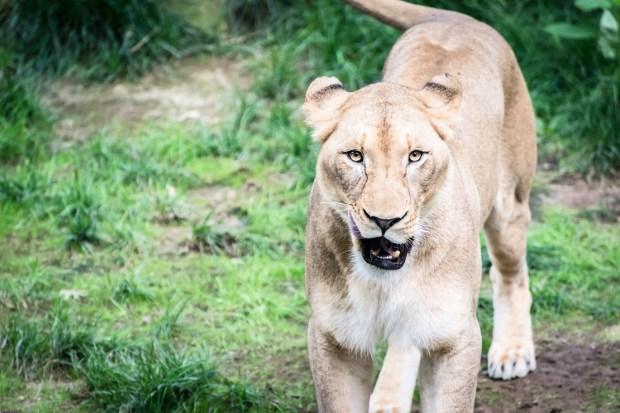 National Zoo w Steve -48