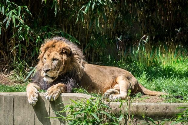 National Zoo w Steve -49
