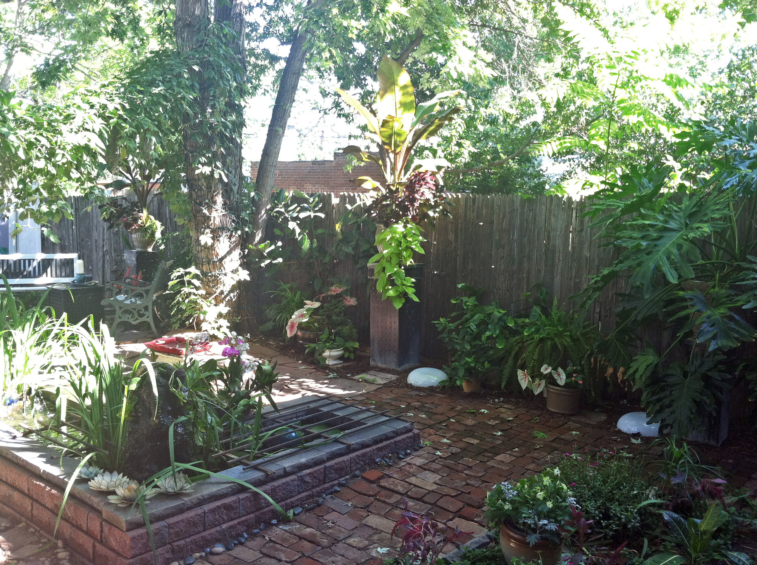 How I Made a Tropical Backyard Oasis in Denver on a Cheap ... on Tropical Backyards  id=48348