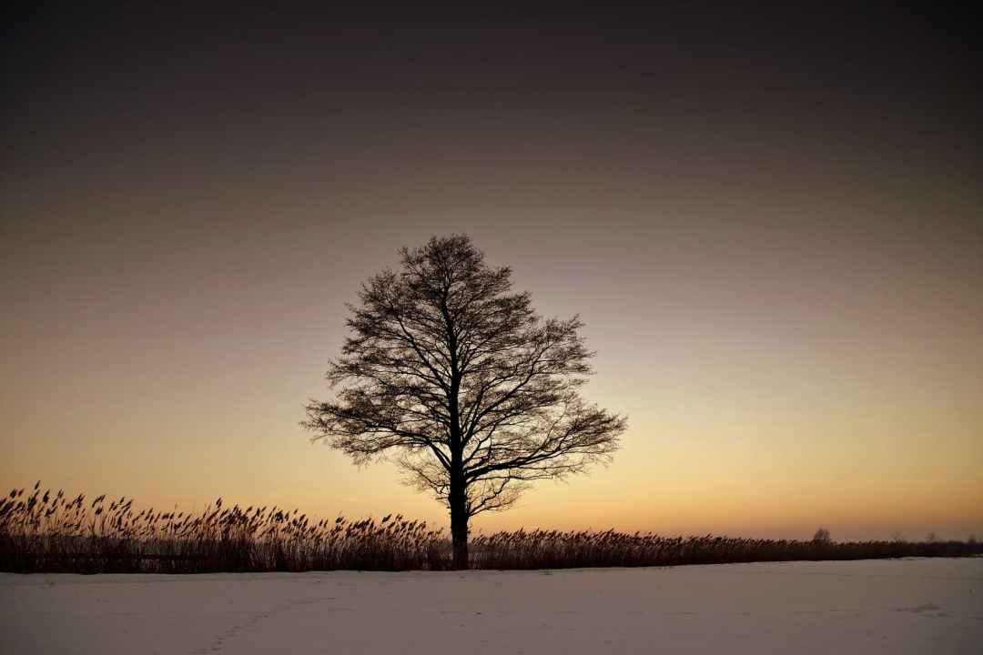 backlit dawn dusk evening
