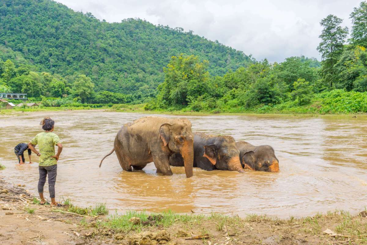 The truth about riding an elephant in Thailand (and an ethical alternative)