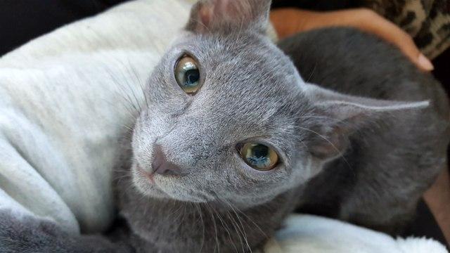 Kitten recovering in Japan