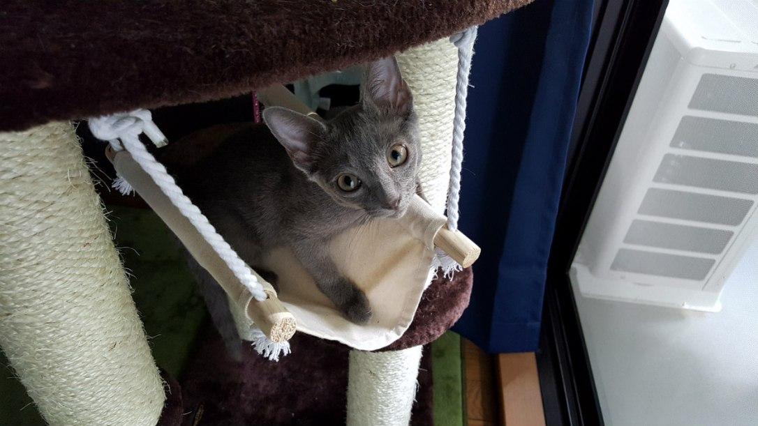 Sick kitten from Asahi Pet
