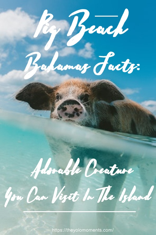 Pig Beach Bahamas Facts - Travel Guide Facts