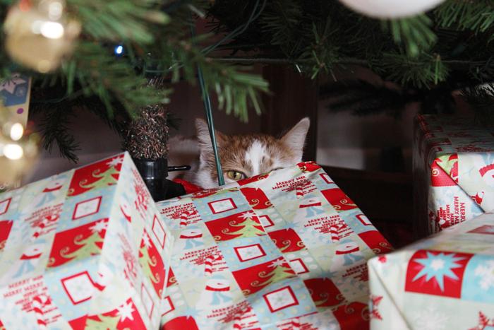 poppy-under-tree