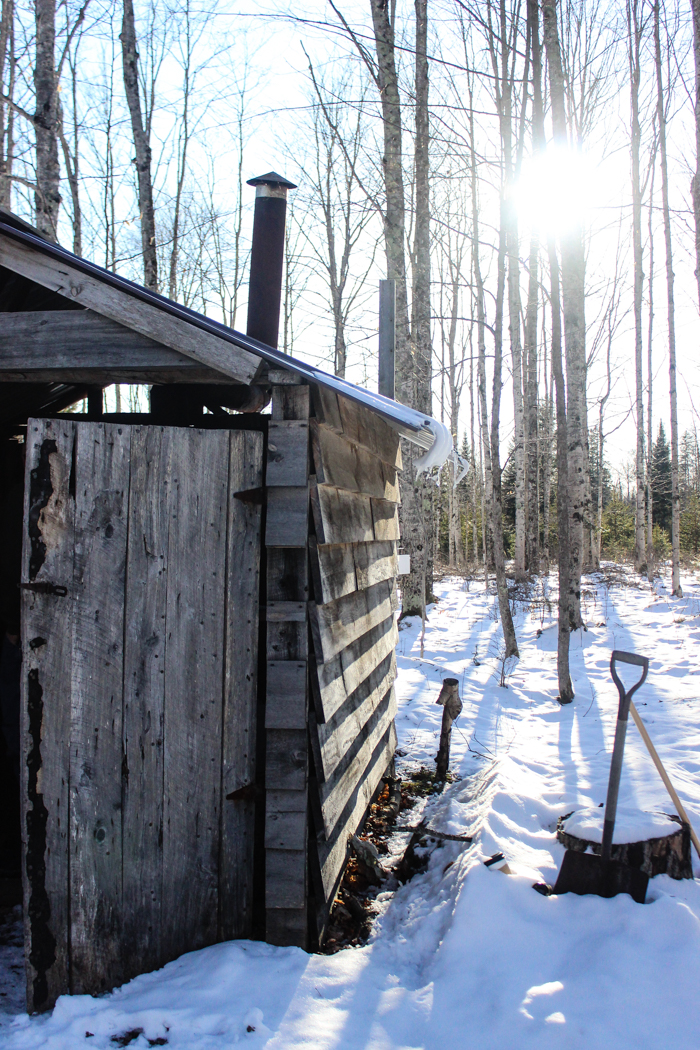 maple syrup shed