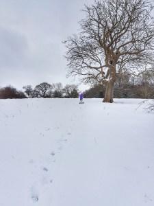 snow day fun sledging