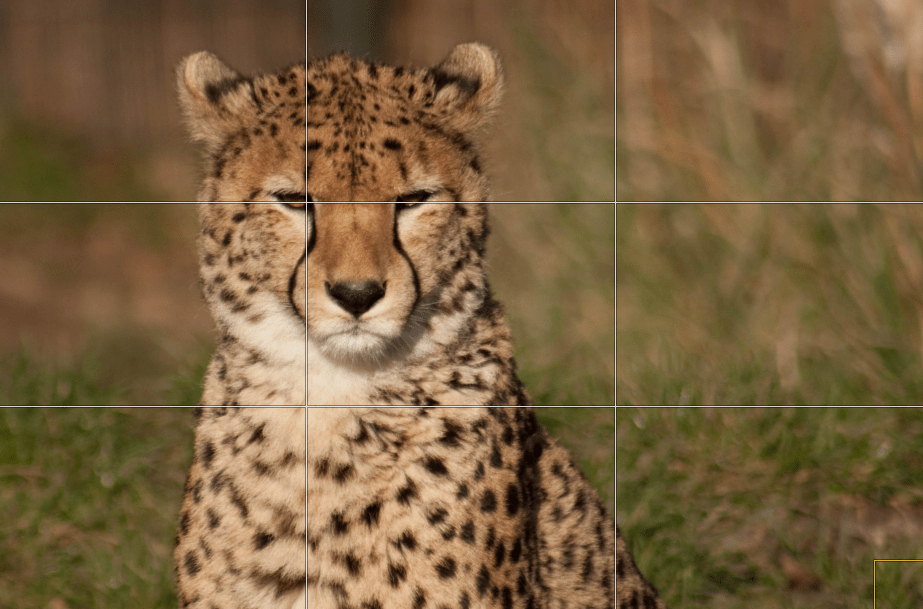 photography rule of thirds