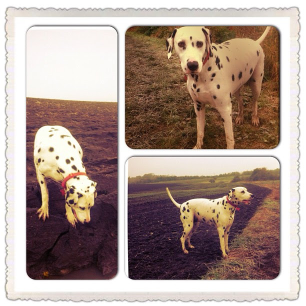 Our Dalmatian: Targeting the Idea Weight | The Yorkshire Dad of 4