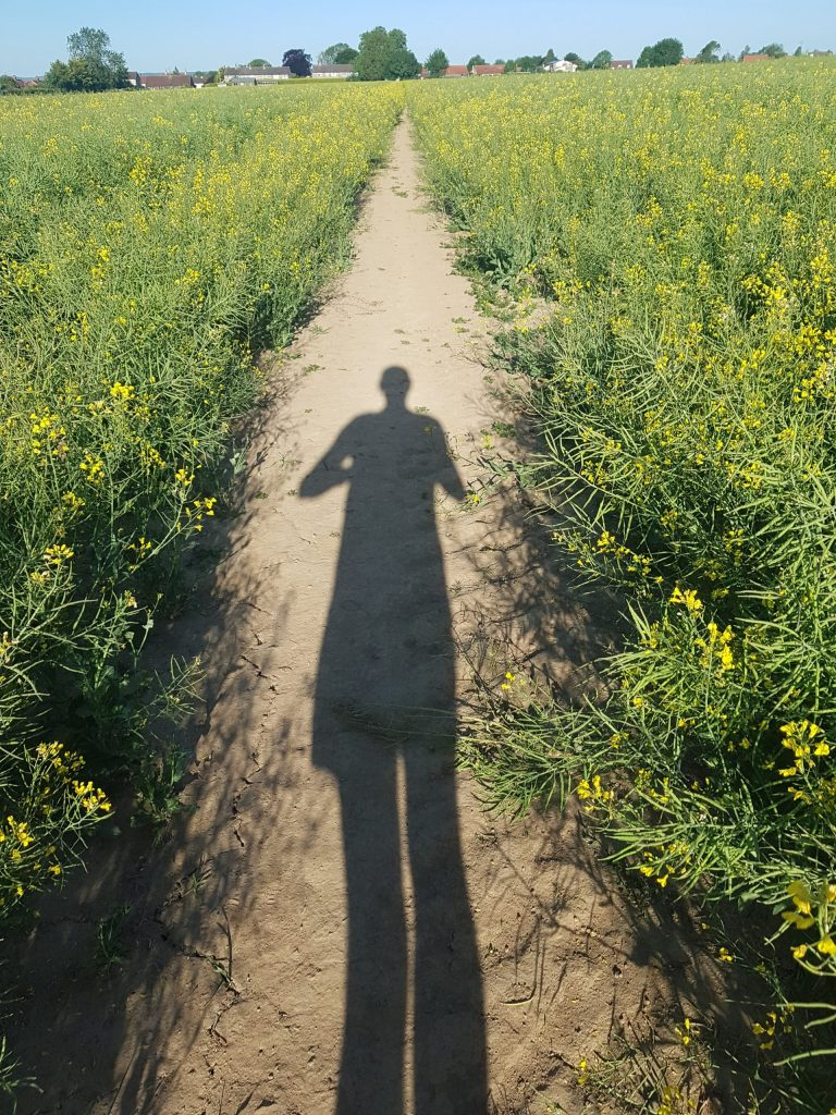 A path through oil seed rape | The Yorkshire Dad of 4
